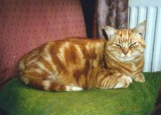 Causley (like other poets of his generation) was a famed lover of cats. Rupert was his last cat and sadly died in 2007.